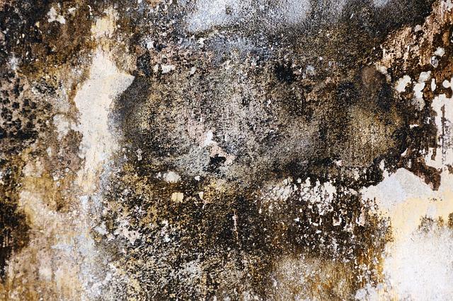 mold damage restoration ft pierce