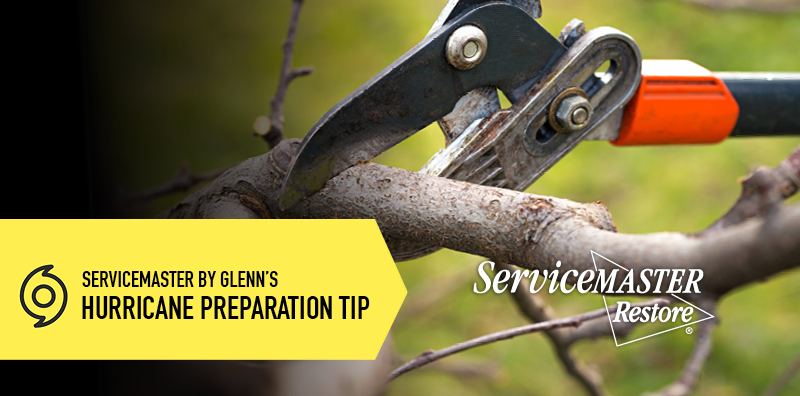 TREE CARE AND YOUR STRUCTURE